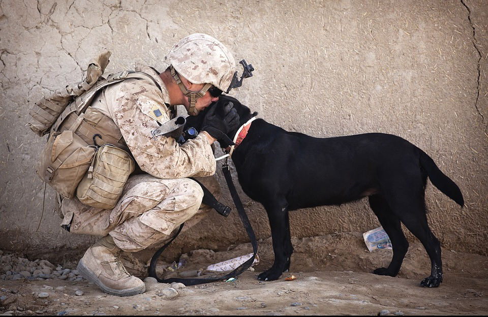 Soldier with his loyal dog
